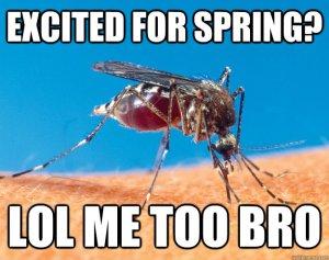 Spring mosquito
