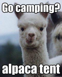 Camping alpaca