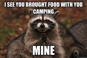 camping raccoon