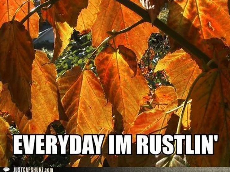 Fall Memes? Too Soon? LOL
