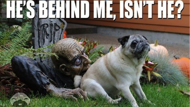 halloween-behind-me