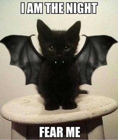 halloween-kitty-bat