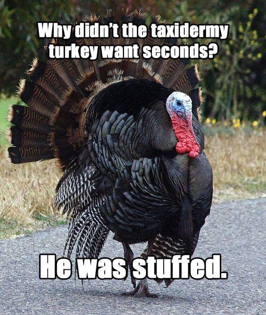 tg-turkey